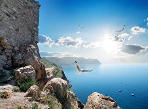 Images Crimea Russia Sea Stone Gull Sky Clouds Nature
