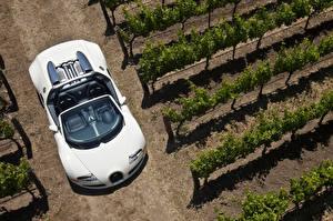 Hintergrundbilder BUGATTI Weiß Cabriolet Von oben Roadster 2008-12 Veyron Grand Sport Roadster