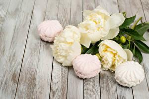 Hintergrundbilder Pfingstrosen Süßigkeiten Zefir Weiß Bretter Blumen