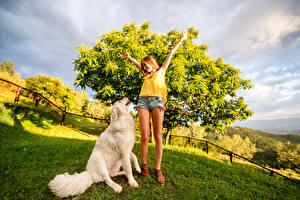 Images Dog Legs Shorts Retriever Grass female Animals
