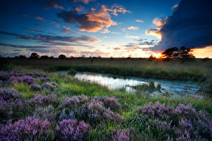 Picture Scenery Sunrise and sunset Sky Clouds Grass Swamp Heather Flowers Nature