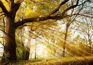 Fotos Jahreszeiten Herbst Bäume Lichtstrahl Ast Baumstamm Natur