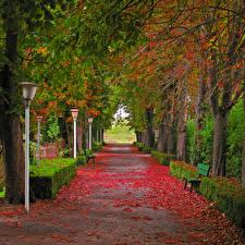 壁纸、、キプロス、公園、秋、小路、街灯、木、木の葉、Episkopi、自然