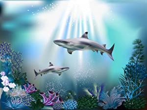 Fonds d'écran Monde sous-marin Corail Requins Rayons de lumière 3D_Graphiques