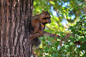 Fotos Eichhörnchen Rinde Ein Tier Tiere