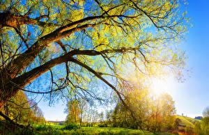 Hintergrundbilder Herbst Baumstamm Ast Natur