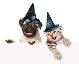 Wallpapers Halloween Dog Cats Bulldog Two Winter hat White background Animals