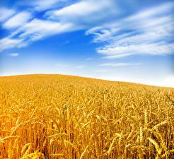 Fotos Felder Himmel Weizen Ähre Natur
