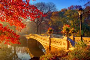 壁纸、、公園、秋、川、橋、枝、街灯、自然
