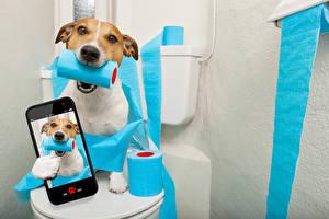 Wallpapers Dog Smartphone Jack Russell terrier Selfie Funny Animals Humor