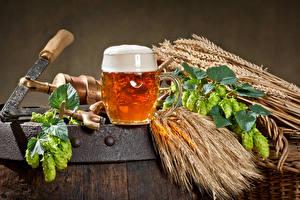 Fotos Getränke Bier Echter Hopfen Weizen Becher Schaum Ähre Lebensmittel