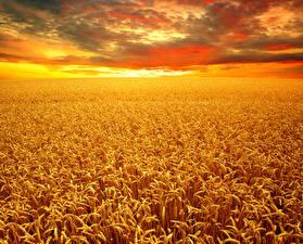 Fotos Landschaftsfotografie Felder Herbst Weizen Ähre Wolke