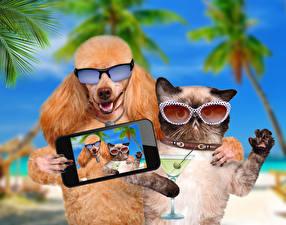 Fotos Hunde Katze Brille Smartphones Pudel Selfie Lustige Humor
