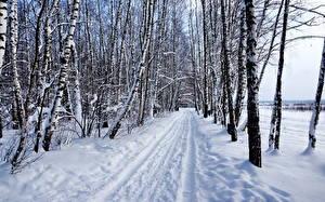 Hintergrundbilder Straße Winter Schnee Birken Bäume