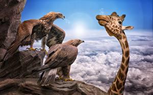 Fotos Vögel Giraffe Adler Wolke ein Tier