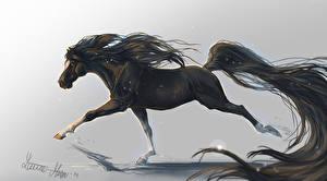 Fotos Pferde Gezeichnet Laufsport ein Tier