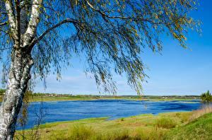 Bilder Fluss Russland Frühling Birken Bäume Velikaya Pskov Natur