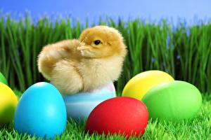 Bilder Hühner Gras Ei