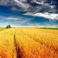 Bilder Landschaftsfotografie Acker Himmel Weizen Ähre Wolke