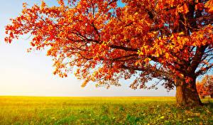 Fotos Herbst Felder Bäume Ast Gras Natur
