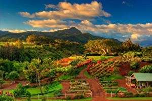 Pictures Autumn Landscape photography Fields Mountain Sky USA Hawaii Clouds Palms Kauai Nature