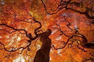 Fotos Herbst Bäume Baumstamm Ast Untersicht Ansicht von unten Natur