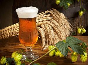 Fotos Getränke Bier Weizen Weinglas Ähre Schaum Blattwerk Lebensmittel