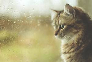 Fotos Katzen Fenster Tropfen Glas Tiere