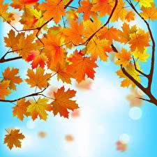 Fotos Vektorgrafik Herbst Blatt Ahorn Ast Natur