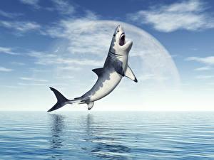 Hintergrundbilder Haie Meer Himmel ein Tier 3D-Grafik