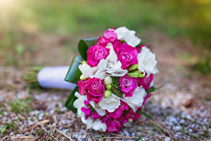 Fotos Sträuße Rosen Freesie Blumen