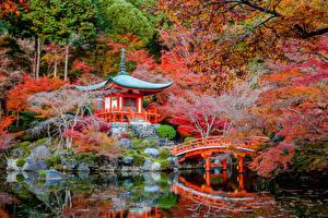 壁纸、、日本、公園、パゴダ、秋、池、橋、京都市、木、自然