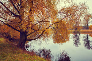 Bilder Herbst Flusse Bäume Ast Natur