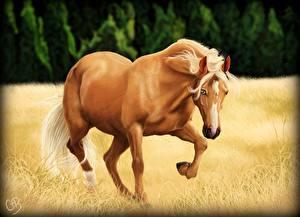 Bilder Pferd Gezeichnet Tiere
