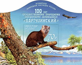 Fotos Nagetiere Briefmarke Ast The 100th Anniversary of the Barguzin Nature Reserve Tiere