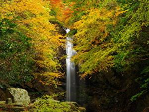 Fotos Herbst Wasserfall Felsen Ast Natur