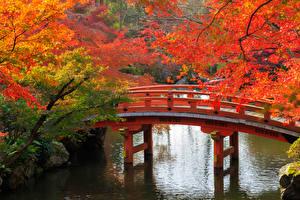 Hintergrundbilder Japan Garten Herbst Teich Brücken Kyōto Ast Natur