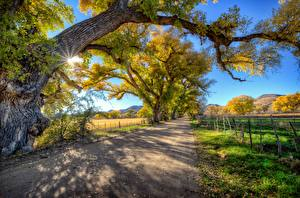 Fotos Straße Bäume Ast Zaun Natur