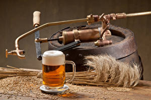 Hintergrundbilder Getränke Bier Weizen Ähre Becher Schaum Getreide Lebensmittel