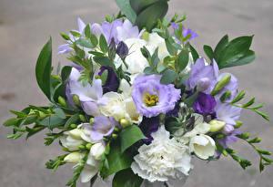 Fotos Blumensträuße Freesie Nelken Blüte