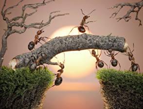Bilder Ameisen Sonnenaufgänge und Sonnenuntergänge Insekten Ast Sonne lolita777 Tiere