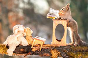 Hintergrundbilder Hörnchen Teddybär Spielzeuge Kreativ Ast Buch Tiere