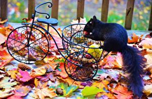 Bilder Hörnchen Herbst Fahrrad Blattwerk Schwarz Tiere