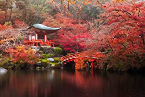 壁纸、、日本、秋、公園、パゴダ、橋、池、京都市、木、自然