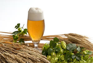 Hintergrundbilder Bier Echter Hopfen Weißer hintergrund Weinglas Schaum Ähre Lebensmittel
