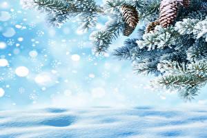 Fotos Fichten Ast Zapfen Schneeflocken Vorlage Grußkarte Natur
