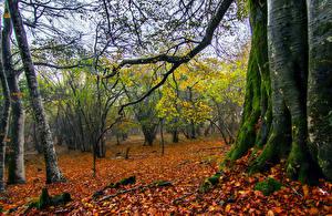 Bilder Herbst Bäume Baumstamm Laubmoose Blattwerk Ast Natur