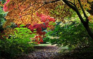 Fotos Vereinigtes Königreich Park Herbst Ast Westonbirt Arboretum Natur