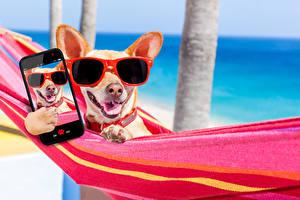 Wallpaper Dog Resorts Chihuahua Eyeglasses Phone Smartphone Hammock Selfie Animals