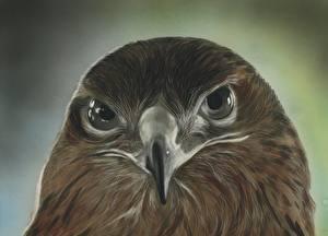 Sfondi desktop Uccello Astore Dipinti Colpo d'occhio Testa Becco Animali